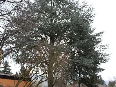 Baum01